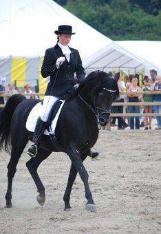 antar horse
