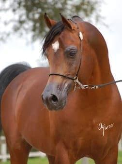 Psytadel horse