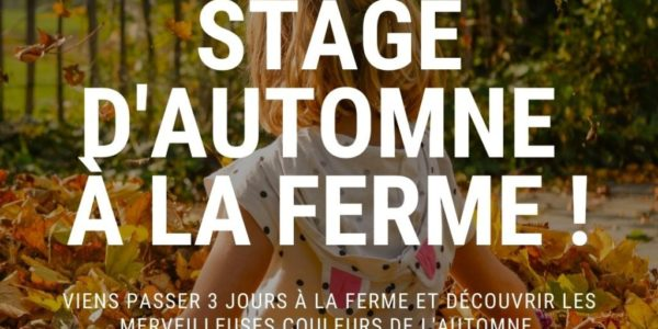 STAGE AUTOMNE 2020